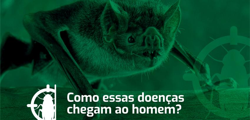 Conheça as doenças que podem ser transmitidas pelo morcego