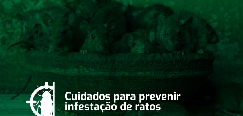 Cuidados para prevenir a infestação de ratos