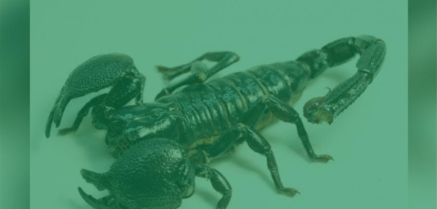 Curiosidades sobre os escorpiões
