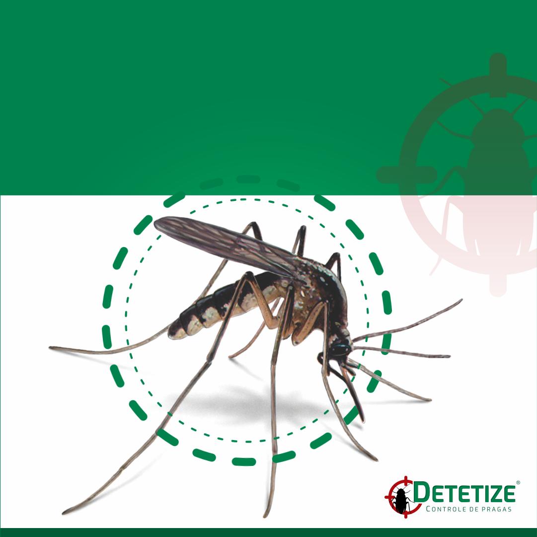 Dicas para se prevenir do AEDES AEGYPT