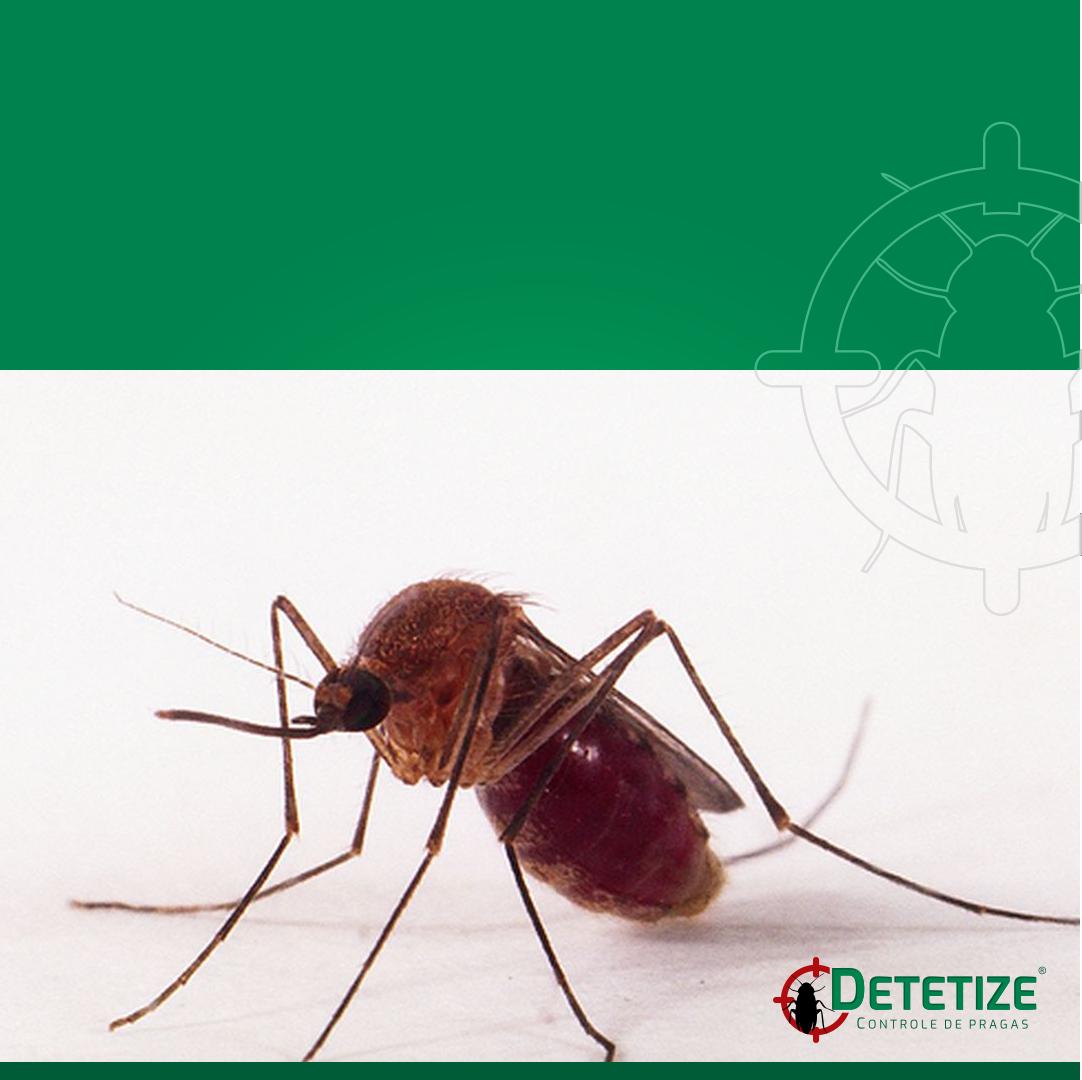 Você conhece os principais tipos de mosquitos?